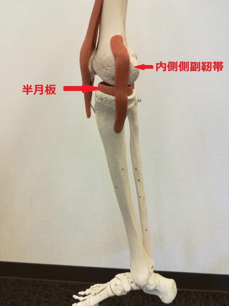 マッサージ 膝 の 痛み